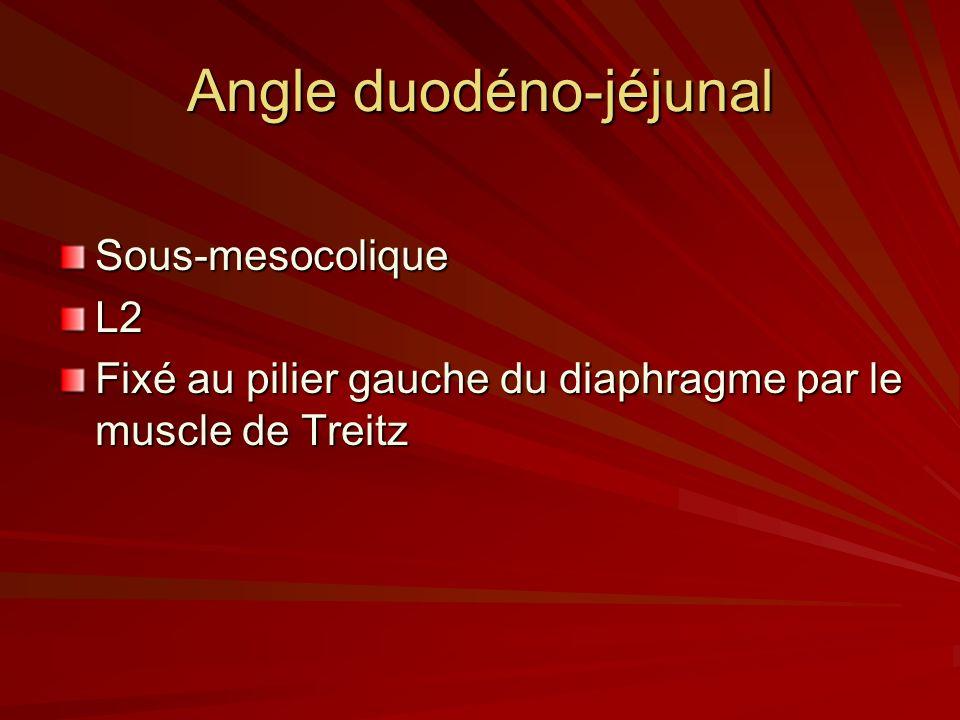 Angle duodéno-jéjunal Sous-mesocolique L2 Fixé au pilier gauche du diaphragme par le muscle de Treitz