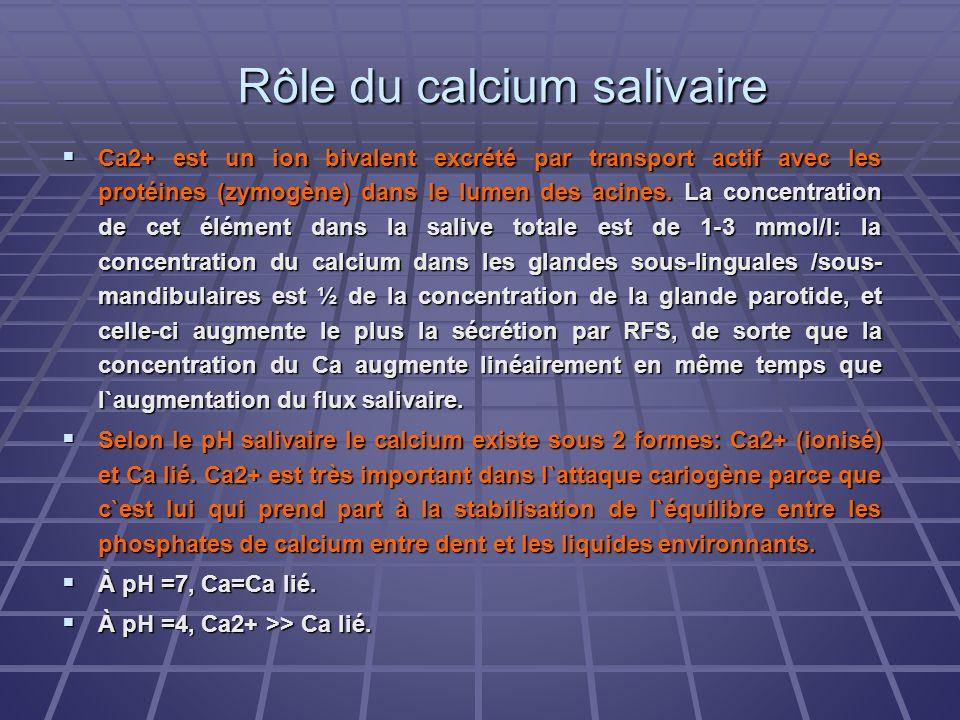Rôle du calcium salivaire Ca2+ est un ion bivalent excrété par transport actif avec les protéines (zymogène) dans le lumen des acines. La concentratio