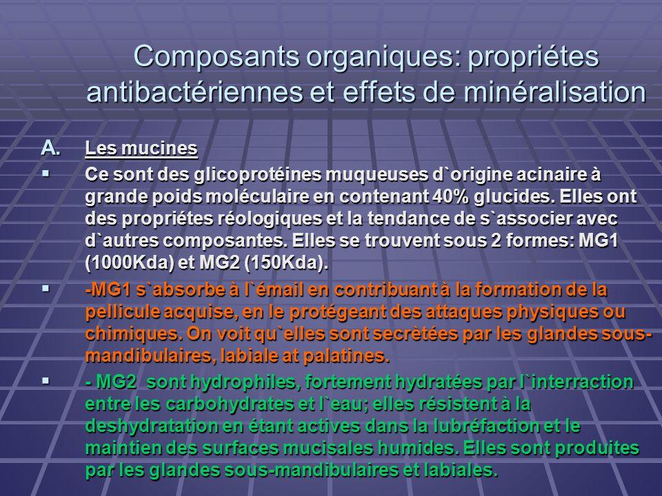 Composants organiques: propriétes antibactériennes et effets de minéralisation A. Les mucines Ce sont des glicoprotéines muqueuses d`origine acinaire