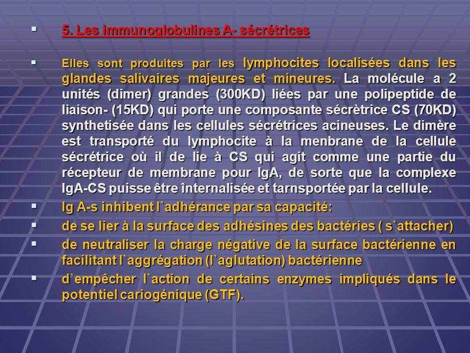 5. Les immunoglobulines A- sécrétrices 5. Les immunoglobulines A- sécrétrices Elles sont produites par les lymphocites localisées dans les glandes sal