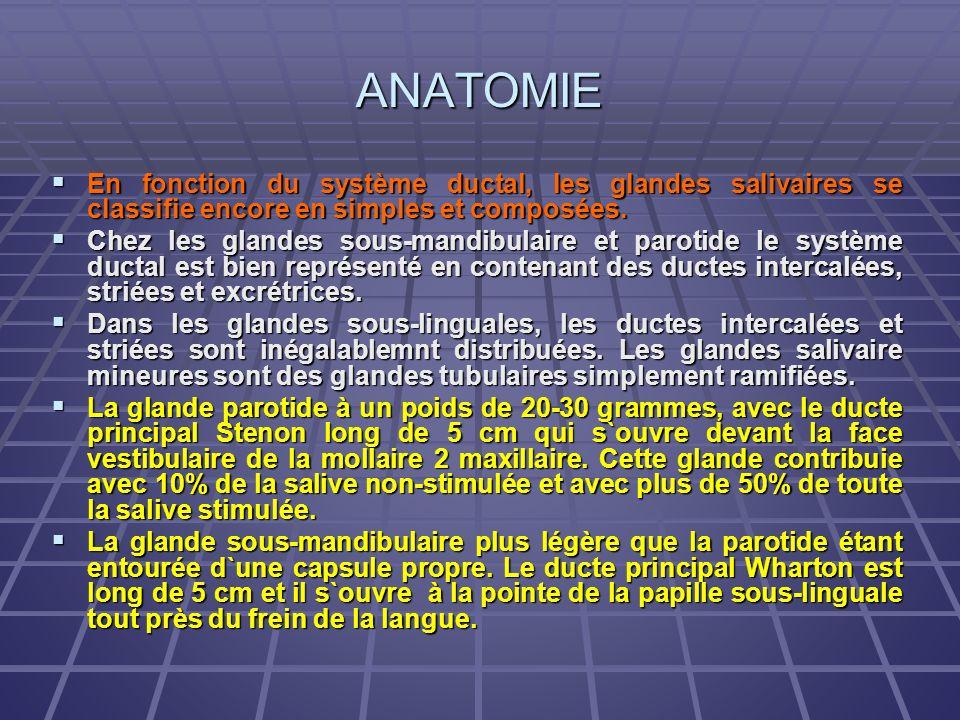 ANATOMIE En fonction du système ductal, les glandes salivaires se classifie encore en simples et composées. En fonction du système ductal, les glandes
