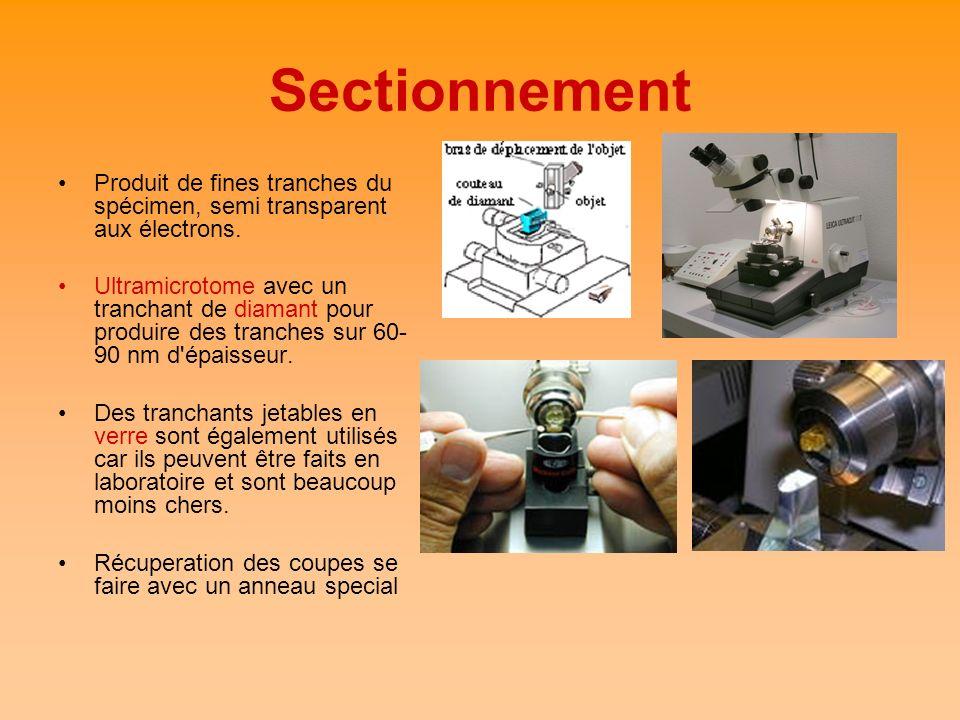 Sectionnement Produit de fines tranches du spécimen, semi transparent aux électrons. Ultramicrotome avec un tranchant de diamant pour produire des tra