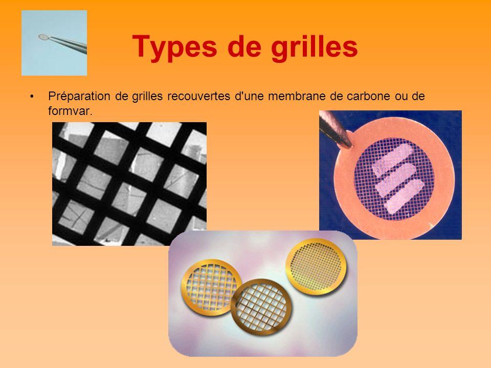 Types de grilles Préparation de grilles recouvertes d'une membrane de carbone ou de formvar.
