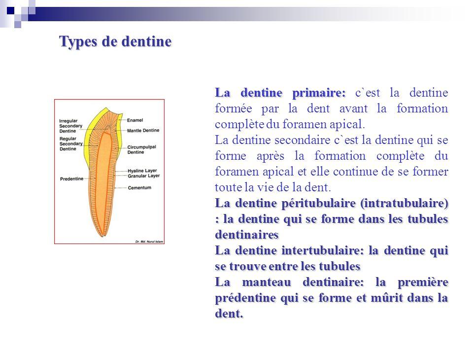 La dentine primaire: La dentine primaire: c`est la dentine formée par la dent avant la formation complète du foramen apical. La dentine secondaire c`e