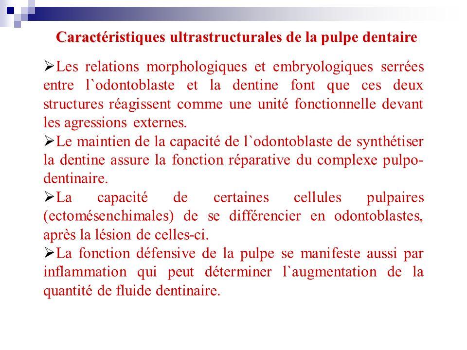 Caract Caractéristiques ultrastructurales de la pulpe dentaire Les relations morphologiques et embryologiques serrées entre l`odontoblaste et la denti