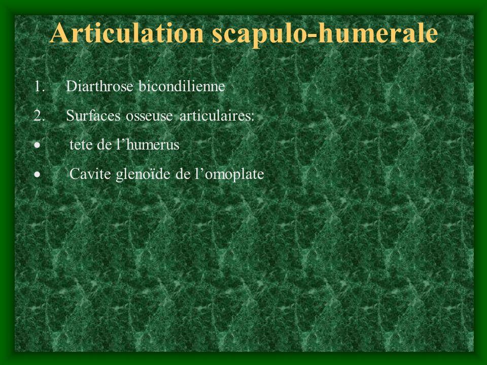 Fixation: - capsule articulaire; bourrelet glenoïdien - ligaments:coraco-huméral, gléno-huméral (superieur, moyen, inferieur) - insertions musculaires: sous-, sus-épineux, petit rond sus-scapulair, biceps