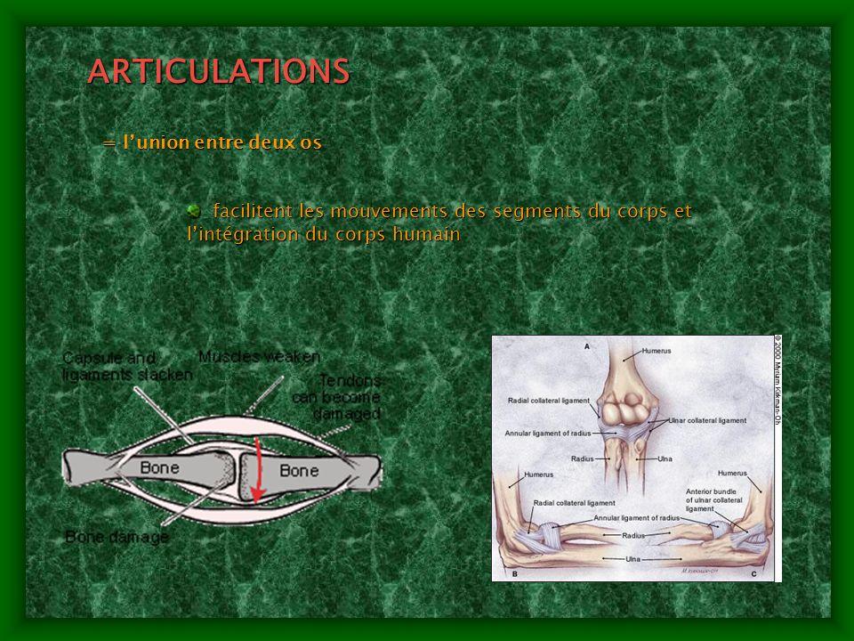 CLASSIFICATION DES ARTICULATIONS FIXES (fibreuses) FIXES (fibreuses) schindylèses (un os entre les 2 bords dun autre os) schindylèses (un os entre les 2 bords dun autre os) Sutures (crâne) Sutures (crâne) Gomphoses (la racine des dents et lalvéole dentaire) Gomphoses (la racine des dents et lalvéole dentaire) SEMI-FIXES (cartilagineuses) SEMI-FIXES (cartilagineuses) Synchondroses (base du crâne) Synchondroses (base du crâne) Symphyses (fibrocartilage parmi deux os – p.e.
