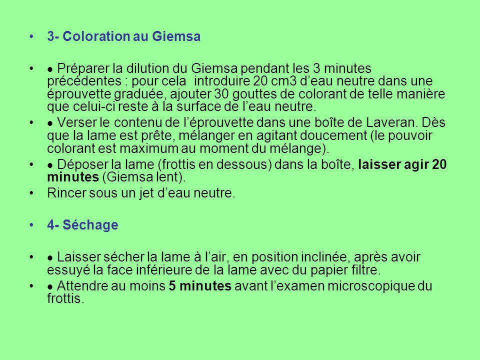 3- Coloration au Giemsa Préparer la dilution du Giemsa pendant les 3 minutes précédentes : pour cela introduire 20 cm3 deau neutre dans une éprouvette