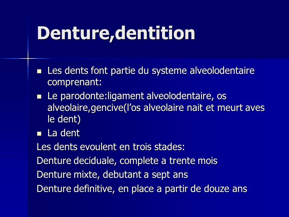 Denture,dentition Les dents font partie du systeme alveolodentaire comprenant: Les dents font partie du systeme alveolodentaire comprenant: Le parodon