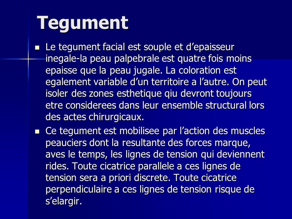 Tegument Le tegument facial est souple et depaisseur inegale-la peau palpebrale est quatre fois moins epaisse que la peau jugale. La coloration est eg
