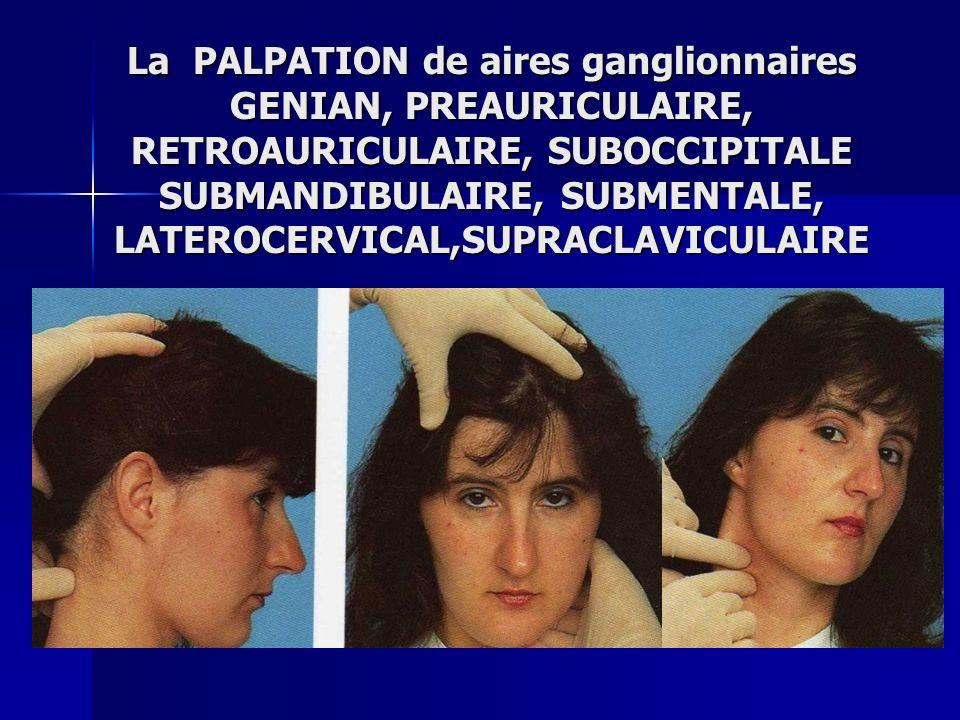 La PALPATION de aires ganglionnaires GENIAN, PREAURICULAIRE, RETROAURICULAIRE, SUBOCCIPITALE SUBMANDIBULAIRE, SUBMENTALE, LATEROCERVICAL,SUPRACLAVICUL