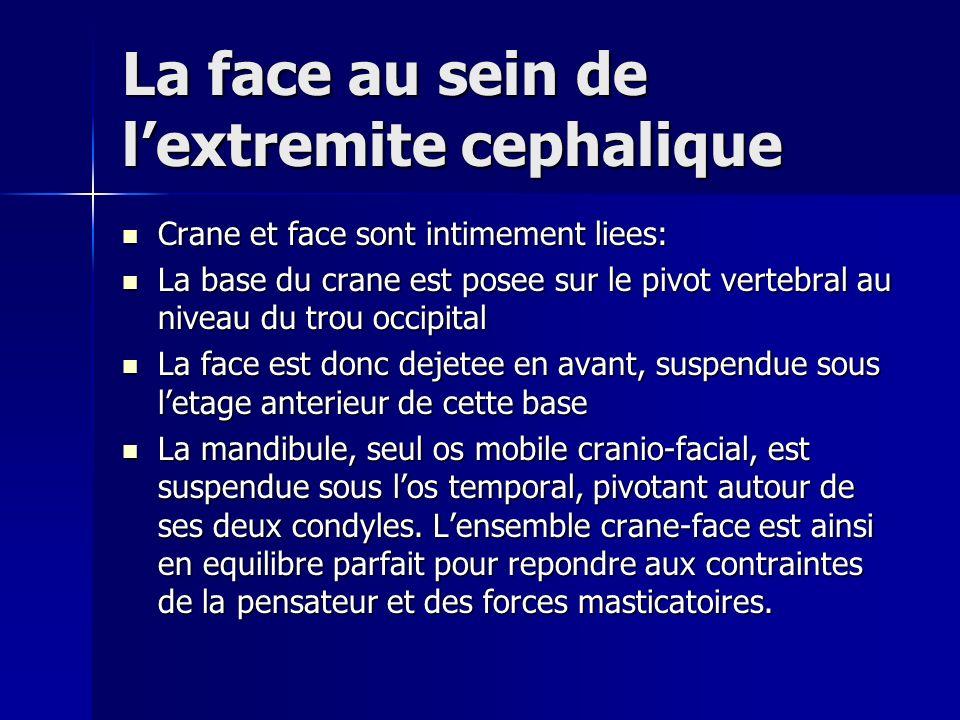 La face au sein de lextremite cephalique Crane et face sont intimement liees: Crane et face sont intimement liees: La base du crane est posee sur le p