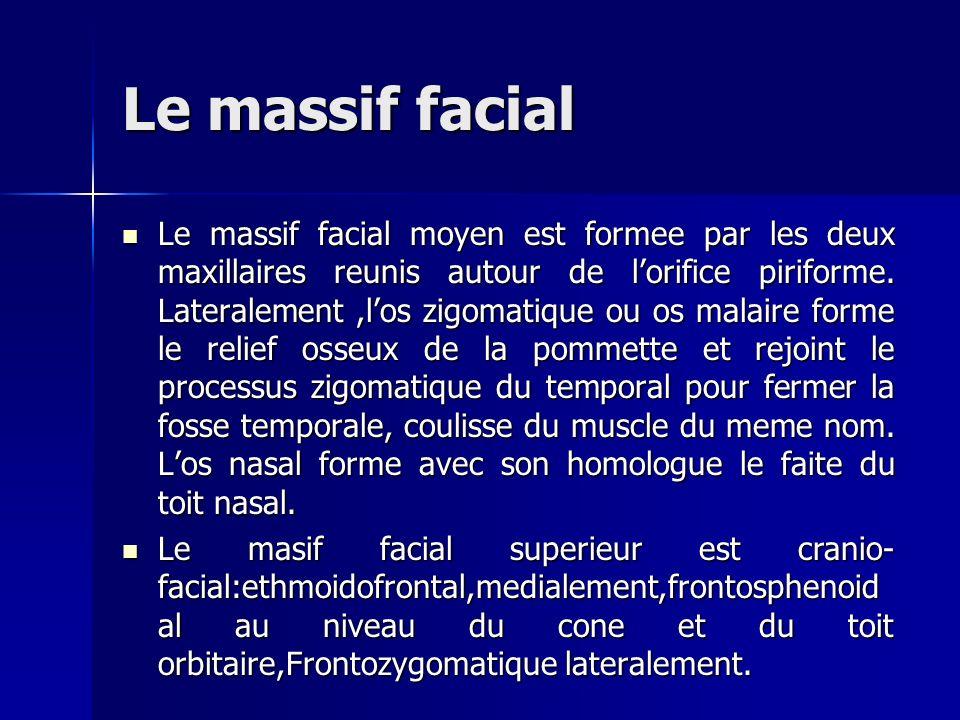 Le massif facial Le massif facial moyen est formee par les deux maxillaires reunis autour de lorifice piriforme. Lateralement,los zigomatique ou os ma