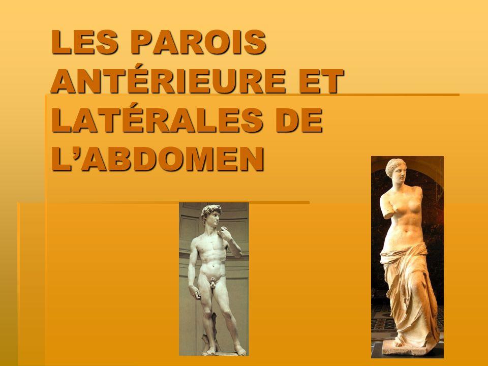 LES PAROIS ANTÉRIEURE ET LATÉRALES DE LABDOMEN