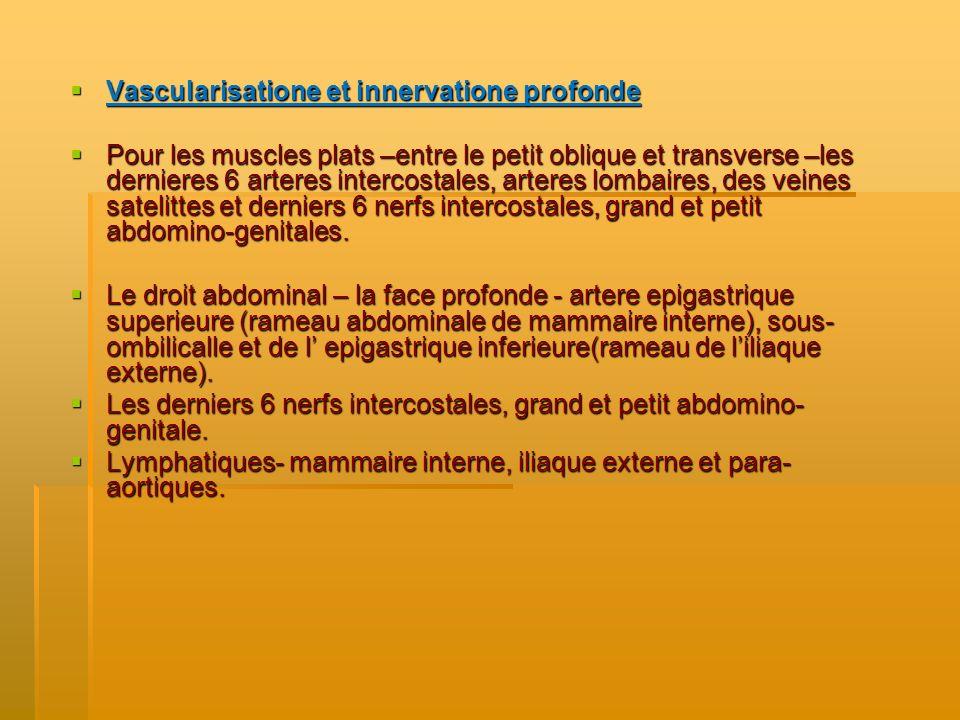 Vascularisatione et innervatione profonde Vascularisatione et innervatione profonde Pour les muscles plats –entre le petit oblique et transverse –les