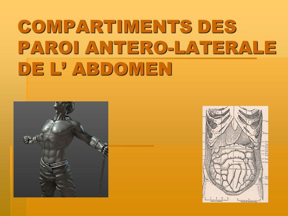 COMPARTIMENTS DES PAROI ANTERO-LATERALE DE L ABDOMEN