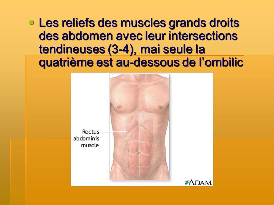 Les reliefs des muscles grands droits des abdomen avec leur intersections tendineuses (3-4), mai seule la quatrième est au-dessous de lombilic Les rel