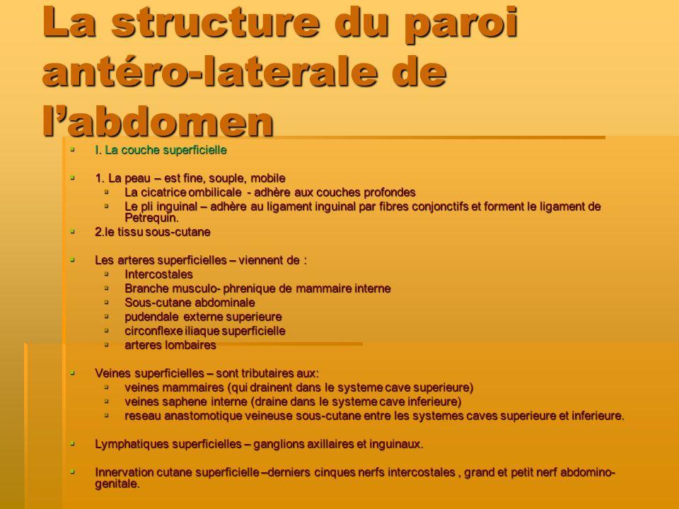 La structure du paroi antéro-laterale de labdomen I. La couche superficielle I. La couche superficielle 1. La peau – est fine, souple, mobile 1. La pe