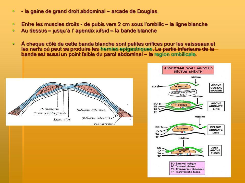 - la gaine de grand droit abdominal – arcade de Douglas. - la gaine de grand droit abdominal – arcade de Douglas. Entre les muscles droits - de pubis