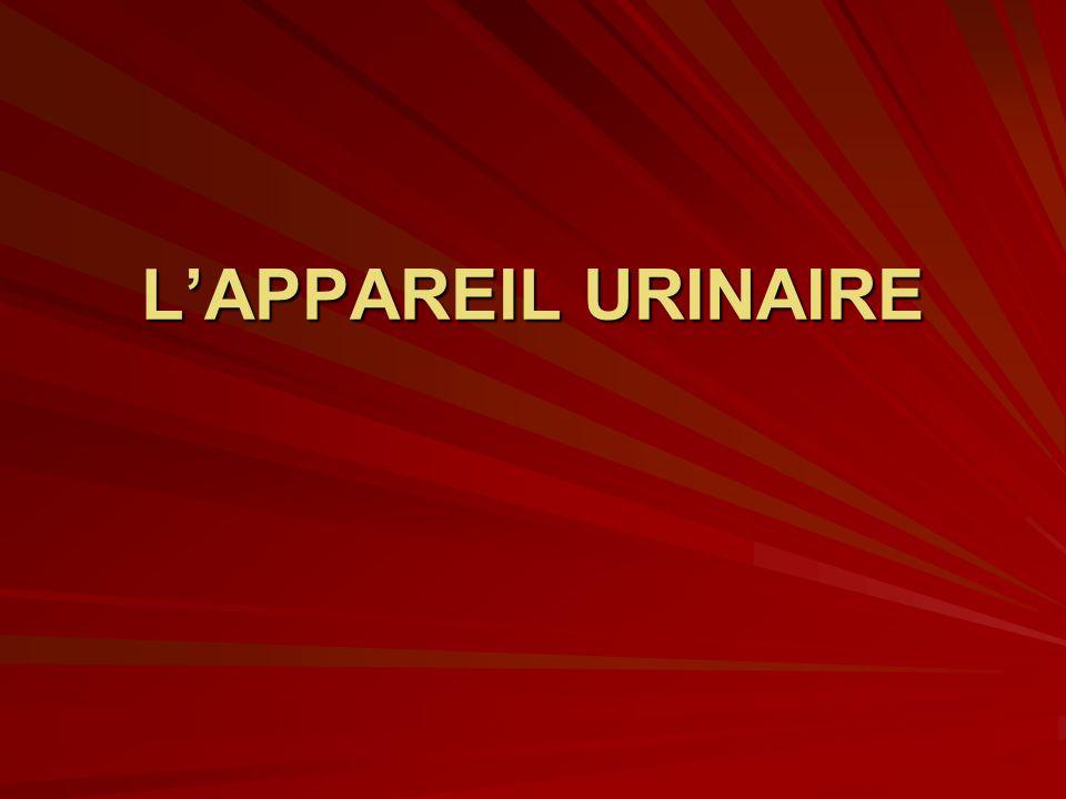 LAPPAREIL URINAIRE