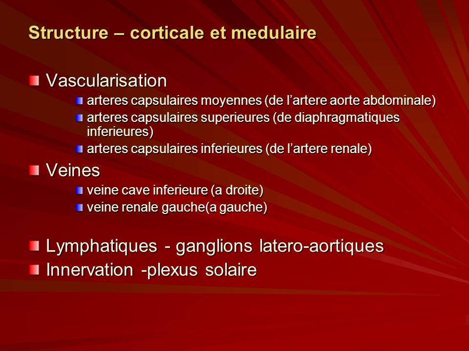 Structure – corticale et medulaire Vascularisation arteres capsulaires moyennes (de lartere aorte abdominale) arteres capsulaires superieures (de diaphragmatiques inferieures) arteres capsulaires inferieures (de lartere renale) Veines veine cave inferieure (a droite) veine renale gauche(a gauche) Lymphatiques - ganglions latero-aortiques Innervation -plexus solaire