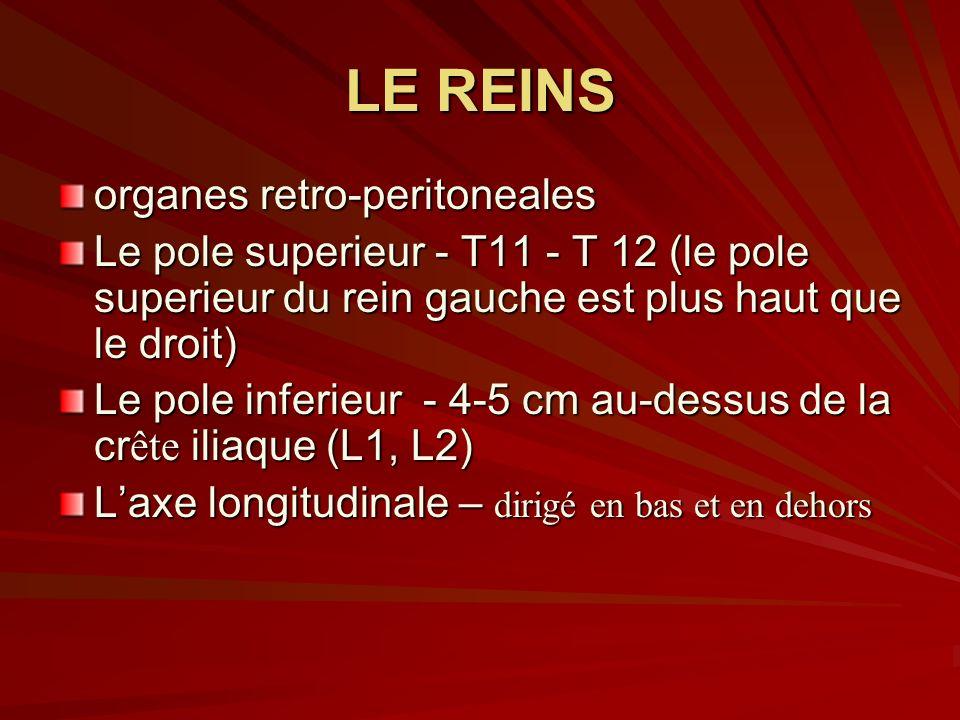 LE REINS organes retro-peritoneales Le pole superieur - T11 - T 12 (le pole superieur du rein gauche est plus haut que le droit) Le pole inferieur - 4-5 cm au-dessus de la cr ête iliaque (L1, L2) Laxe longitudinale – dirigé en bas et en dehors