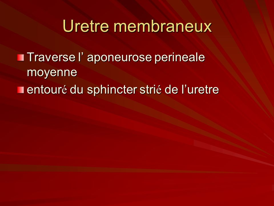 Uretre membraneux Traverse l aponeurose perineale moyenne entour é du sphincter stri é de luretre
