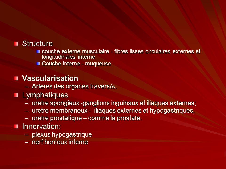 Structure couche externe musculaire - fibres lisses circulaires externes et longitudinales interne Couche interne - muqueuse Vascularisation –Arteres des organes travers és.