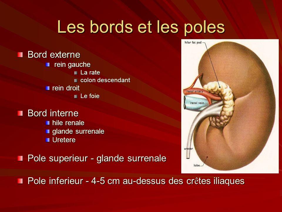 Les bords et les poles Bord externe rein gauche rein gauche La rate colon descendant rein droit Le foie Bord interne hile renale glande surrenale Uretere Pole superieur - glande surrenale Pole inferieur - 4-5 cm au-dessus des cr ê tes iliaques