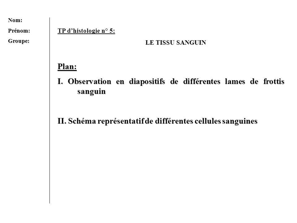 Nom:Prénom:Groupe: TP dhistologie n° 5: LE TISSU SANGUIN Plan: I. Observation en diapositifs de différentes lames de frottis sanguin II. Schéma représ