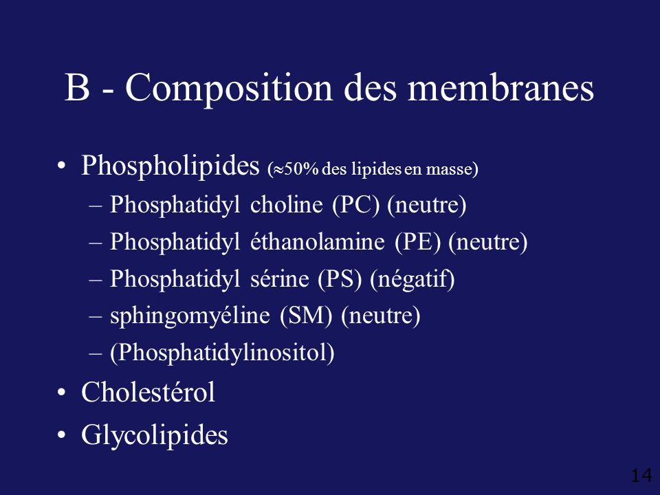14 B - Composition des membranes Phospholipides ( 50% des lipides en masse) –Phosphatidyl choline (PC) (neutre) –Phosphatidyl éthanolamine (PE) (neutr