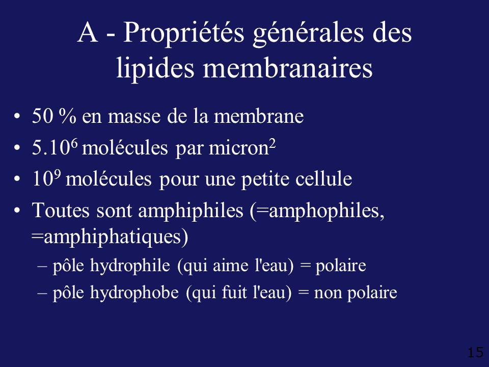 15 A - Propriétés générales des lipides membranaires 50 % en masse de la membrane 5.10 6 molécules par micron 2 10 9 molécules pour une petite cellule