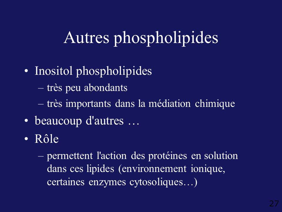 27 Autres phospholipides Inositol phospholipides –très peu abondants –très importants dans la médiation chimique beaucoup d'autres … Rôle –permettent