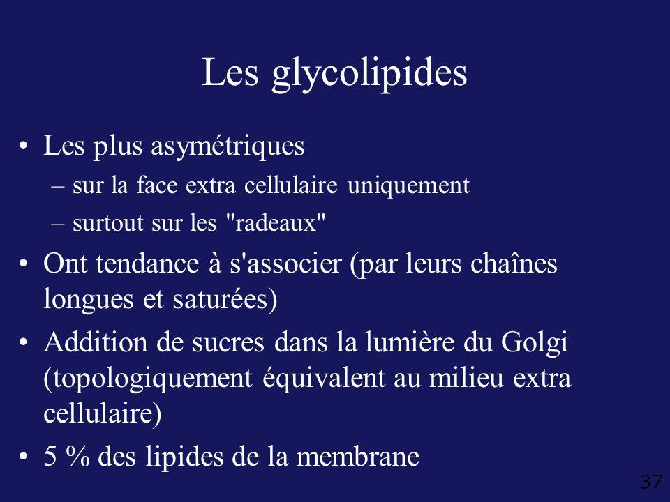37 Les glycolipides Les plus asymétriques –sur la face extra cellulaire uniquement –surtout sur les