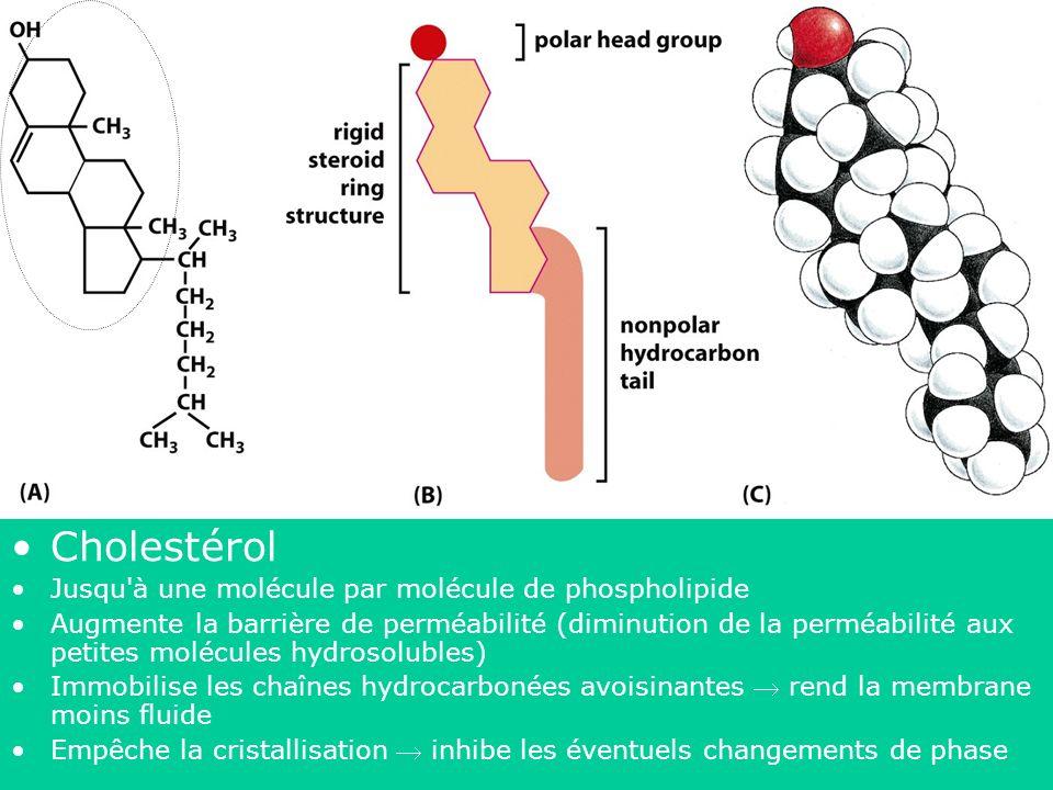 43 Figure 10-4 Molecular Biology of the Cell (© Garland Science 2008) Cholestérol Jusqu'à une molécule par molécule de phospholipide Augmente la barri