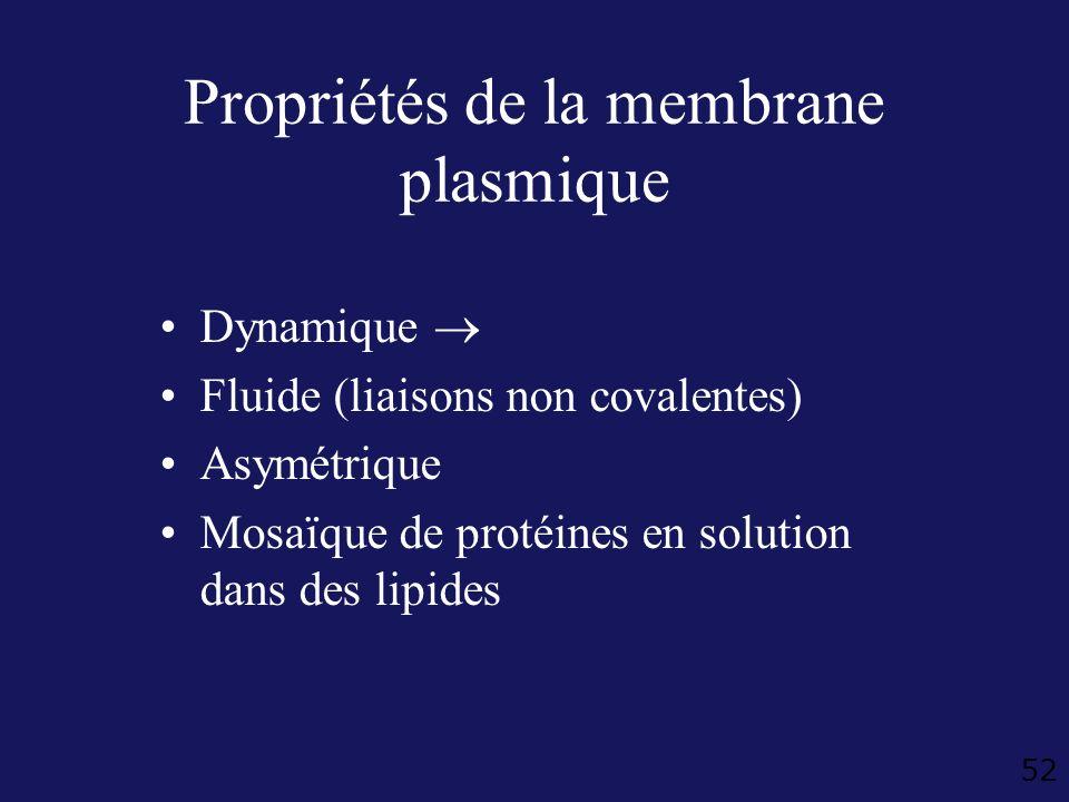 52 Propriétés de la membrane plasmique Dynamique Fluide (liaisons non covalentes) Asymétrique Mosaïque de protéines en solution dans des lipides