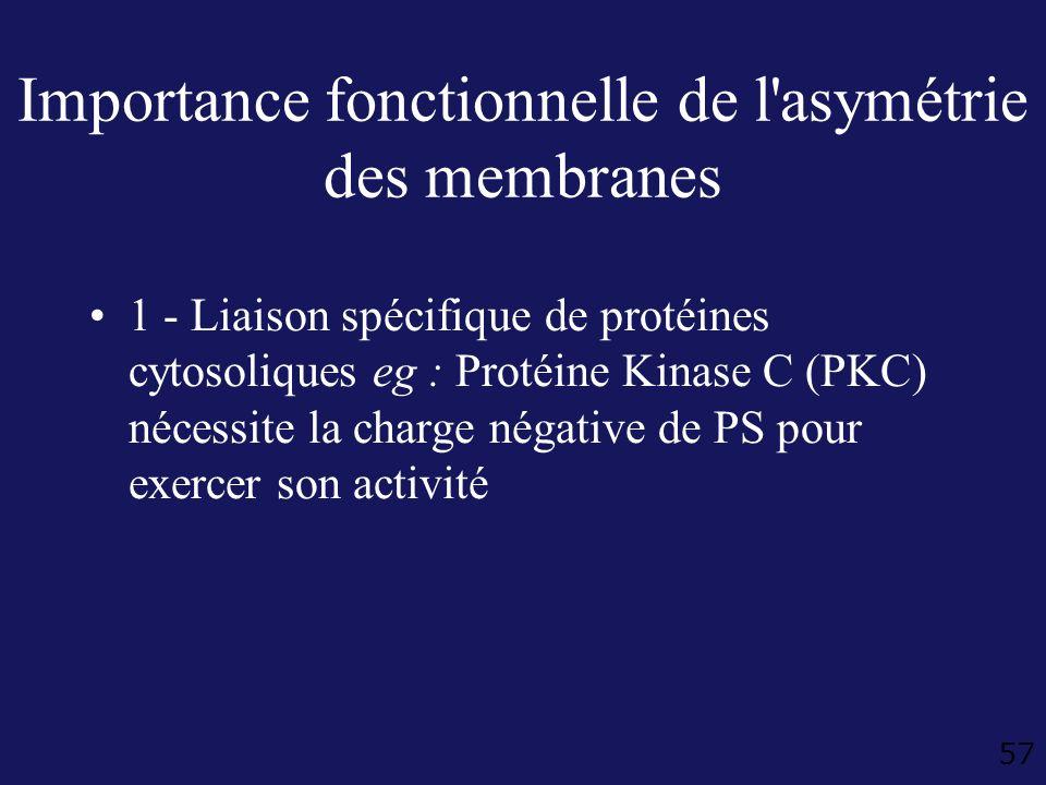 57 Importance fonctionnelle de l'asymétrie des membranes 1 - Liaison spécifique de protéines cytosoliques eg : Protéine Kinase C (PKC) nécessite la ch