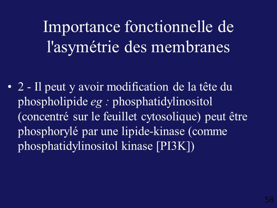 58 Importance fonctionnelle de l'asymétrie des membranes 2 - Il peut y avoir modification de la tête du phospholipide eg : phosphatidylinositol (conce