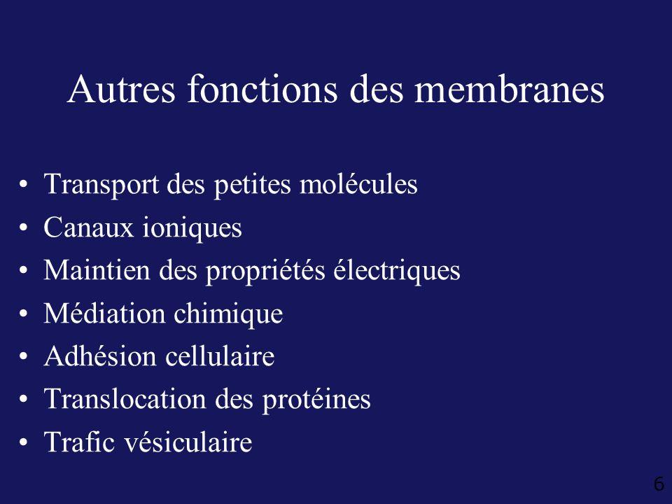 6 Autres fonctions des membranes Transport des petites molécules Canaux ioniques Maintien des propriétés électriques Médiation chimique Adhésion cellu