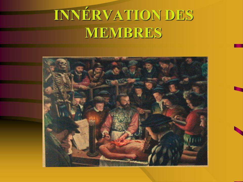 INNÉRVATION DES MEMBRES