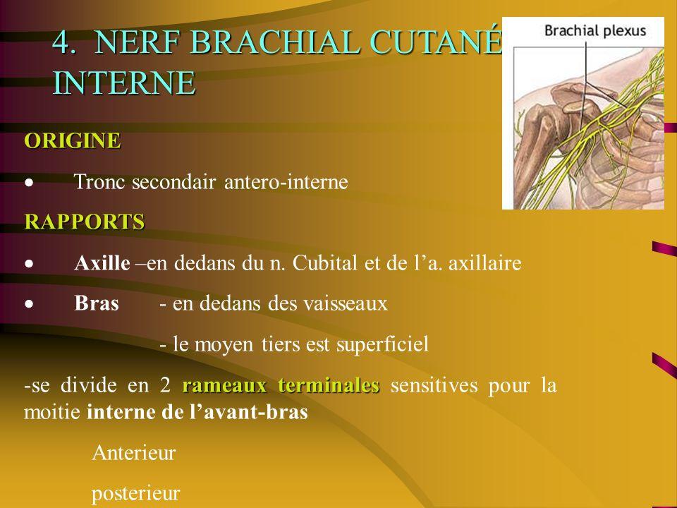 4. NERF BRACHIAL CUTANÉ INTERNE ORIGINE Tronc secondair antero-interne RAPPORTS Axille –en dedans du n. Cubital et de la. axillaire Bras- en dedans de