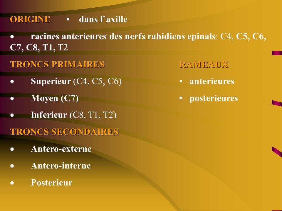 ORIGINE ORIGINE dans laxille racines anterieures des nerfs rahidiens epinals: C4, C5, C6, C7, C8, T1, T2 TRONCS PRIMAIRESRAMEAUX Superieur (C4, C5, C6) anterieures Moyen (C7) posterieures Inferieur (C8, T1, T2) TRONCS SECONDAIRES Antero-externe Antero-interne Posterieur