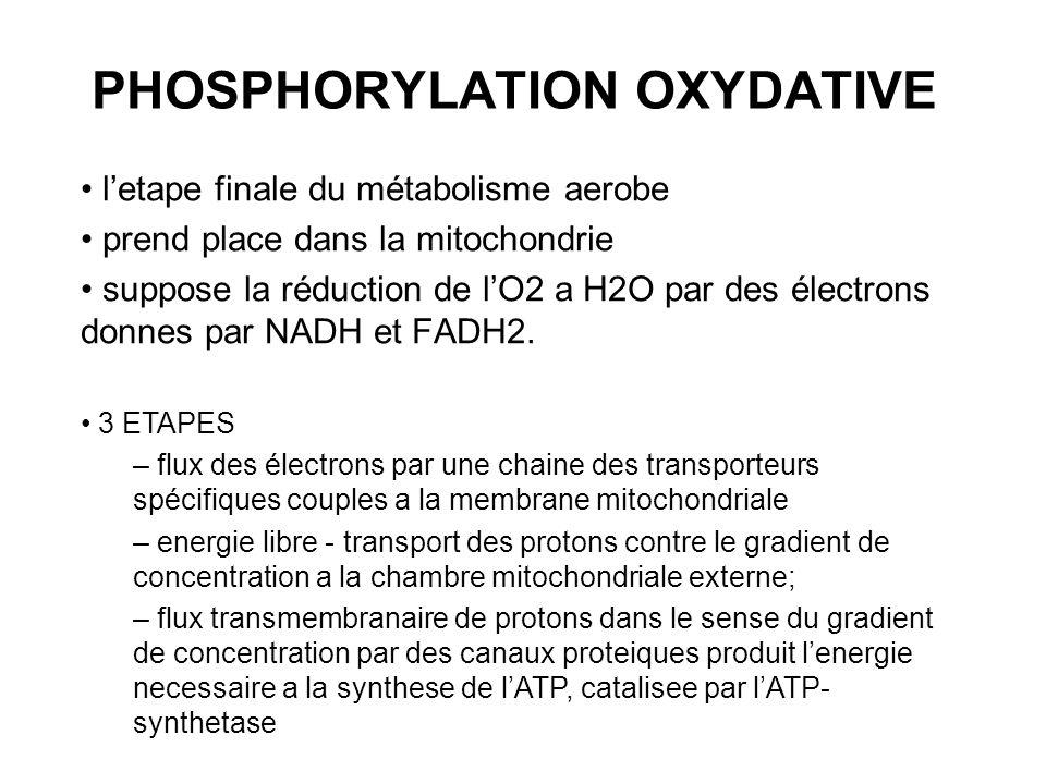 letape finale du métabolisme aerobe prend place dans la mitochondrie suppose la réduction de lO2 a H2O par des électrons donnes par NADH et FADH2. 3 E