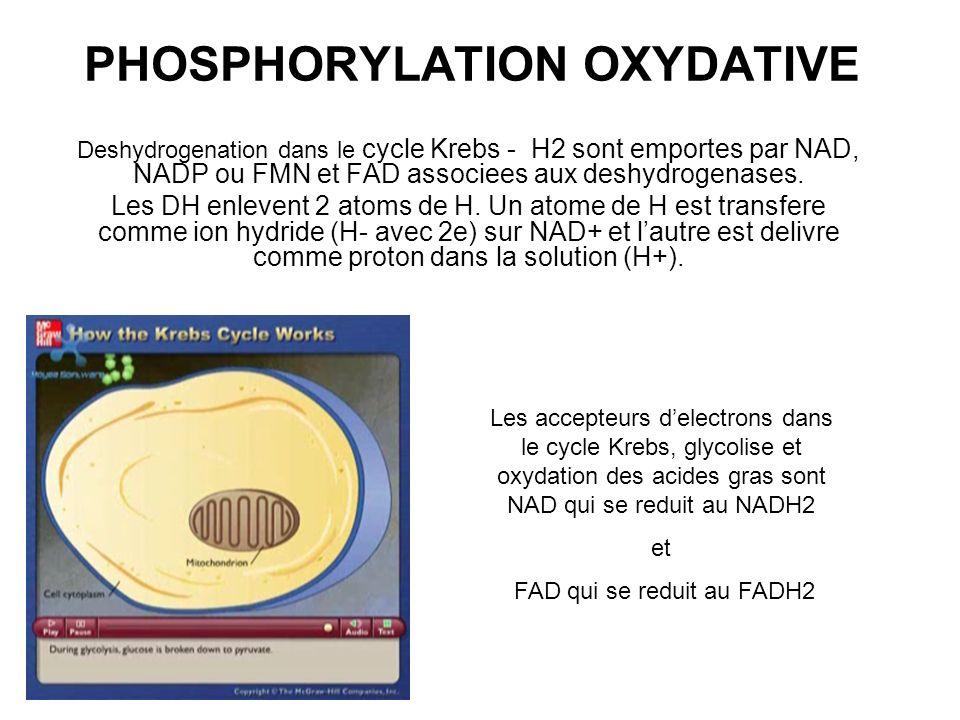 PHOSPHORYLATION OXYDATIVE Deshydrogenation dans le cycle Krebs - H2 sont emportes par NAD, NADP ou FMN et FAD associees aux deshydrogenases. Les DH en