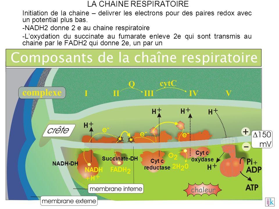 LA CHAINE RESPIRATOIRE Initiation de la chaine – delivrer les electrons pour des paires redox avec un potential plus bas. -NADH2 donne 2 e au chaine r