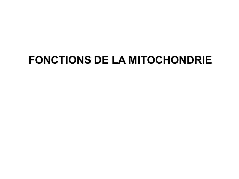 FONCTIONS DE LA MITOCHONDRIE