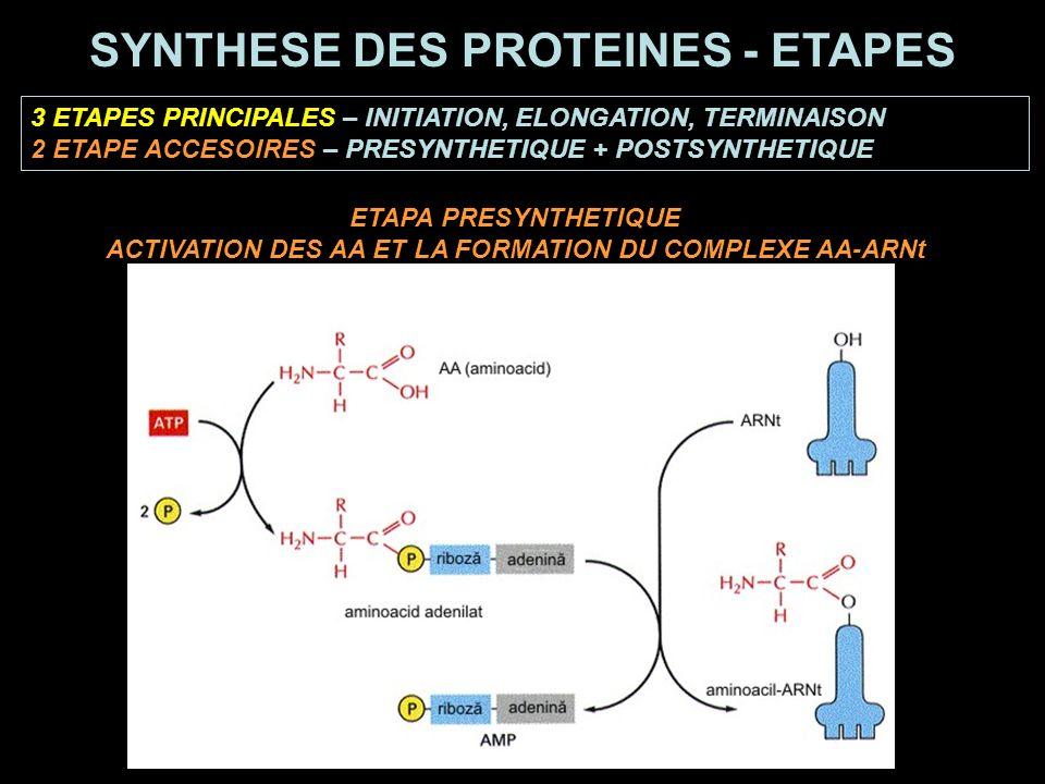3 ETAPES PRINCIPALES – INITIATION, ELONGATION, TERMINAISON 2 ETAPE ACCESOIRES – PRESYNTHETIQUE + POSTSYNTHETIQUE SYNTHESE DES PROTEINES - ETAPES ETAPA PRESYNTHETIQUE ACTIVATION DES AA ET LA FORMATION DU COMPLEXE AA-ARNt
