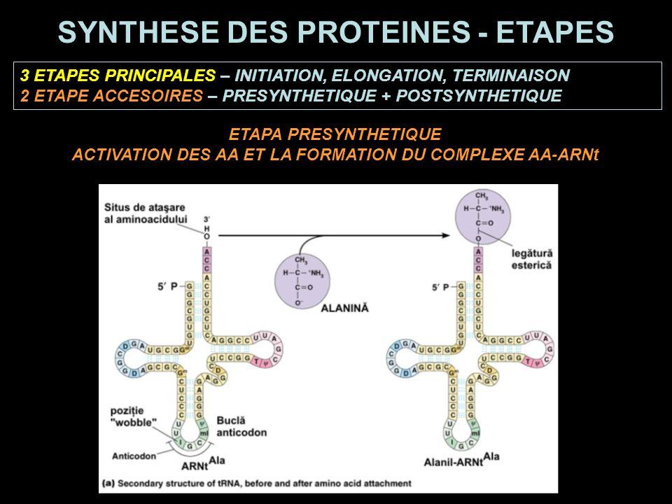 ETAPA PRESYNTHETIQUE ACTIVATION DES AA ET LA FORMATION DU COMPLEXE AA-ARNt 3 ETAPES PRINCIPALES – INITIATION, ELONGATION, TERMINAISON 2 ETAPE ACCESOIRES – PRESYNTHETIQUE + POSTSYNTHETIQUE SYNTHESE DES PROTEINES - ETAPES