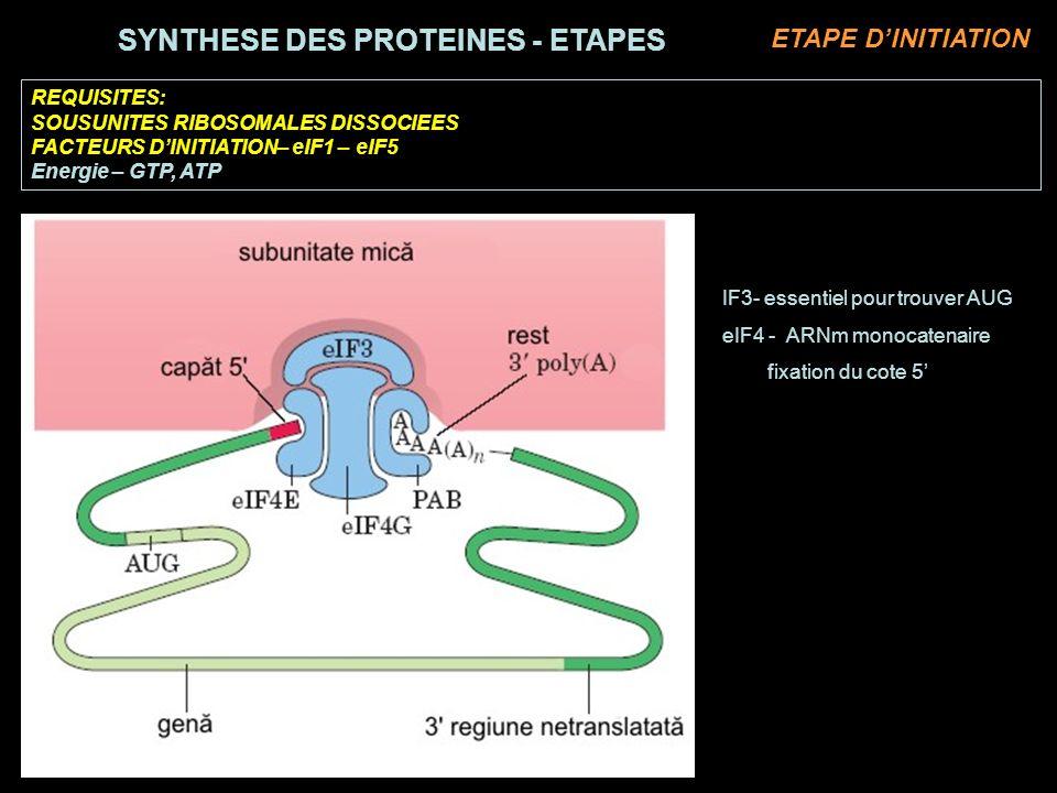 REQUISITES: SOUSUNITES RIBOSOMALES DISSOCIEES FACTEURS DINITIATION– eIF1 – eIF5 Energie – GTP, ATP IF3- essentiel pour trouver AUG eIF4 - ARNm monocatenaire fixation du cote 5 SYNTHESE DES PROTEINES - ETAPES ETAPE DINITIATION
