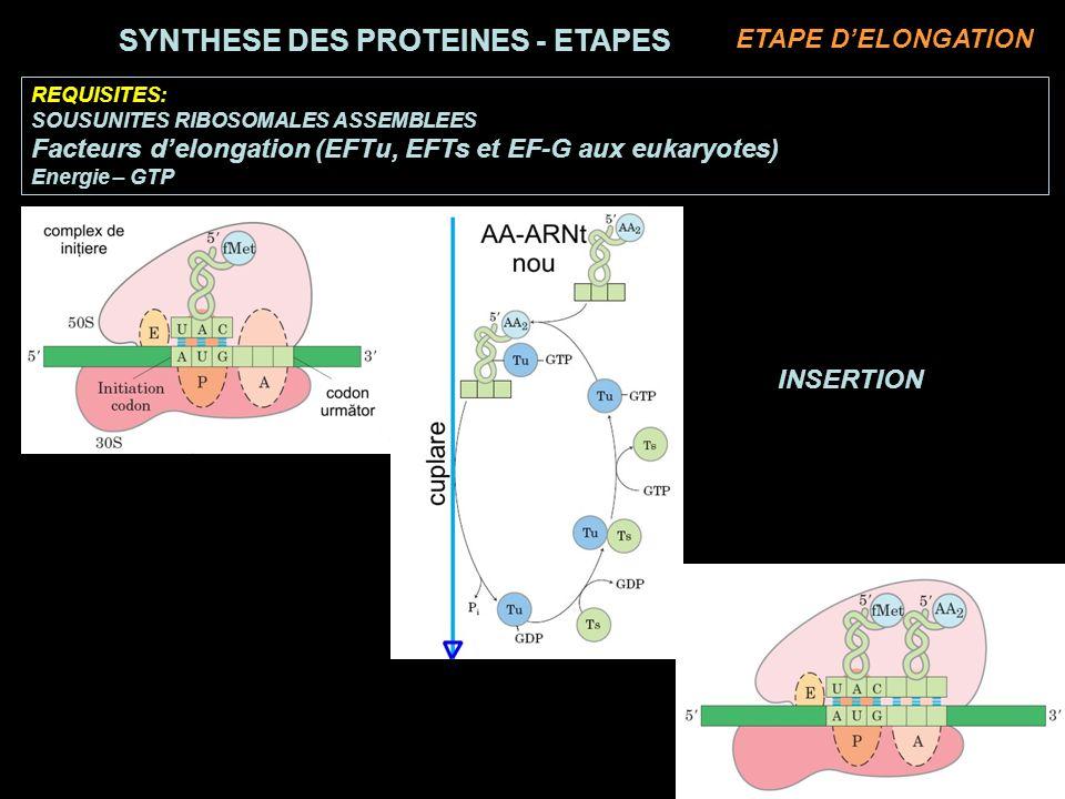 REQUISITES: SOUSUNITES RIBOSOMALES ASSEMBLEES Facteurs delongation (EFTu, EFTs et EF-G aux eukaryotes) Energie – GTP INSERTION SYNTHESE DES PROTEINES - ETAPES ETAPE DELONGATION